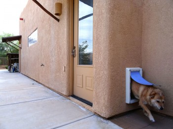 Conveniently located pet door (our dog, Pickles, not included)