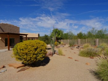 Backyard desert landscape
