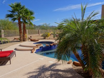 Palm trees surround the pool - it's an oasis!