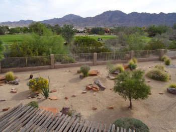 Backyard desert landcape